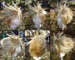cloud strife wig
