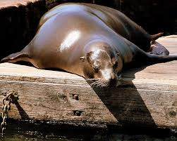 training seals