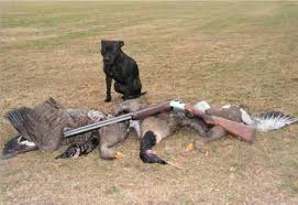 geese shooting