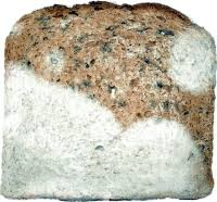 bread mold images