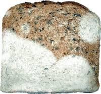bread molds