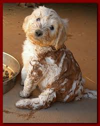mud puppies for sale