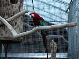 macaw eggs