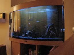 moon light fish