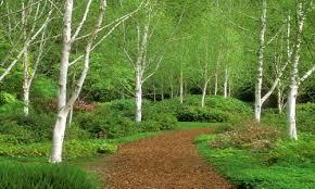 giardino verdi