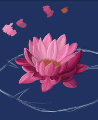 parts of a water lily