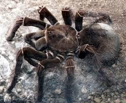 animal spider