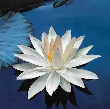 lotus water plant
