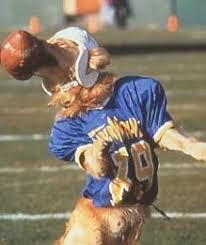 air bud football