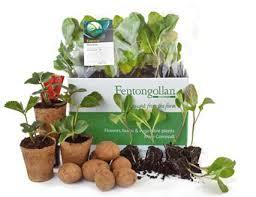 veg plant