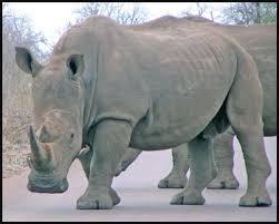 almost extinct species