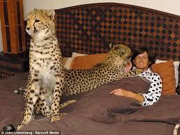 cheetah homes