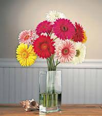 daisy flower arrangements