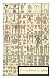 atlas anatomic