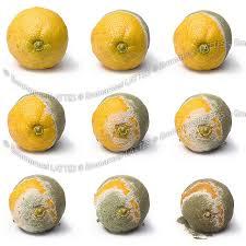 citron citrus