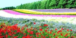 images of flower gardens