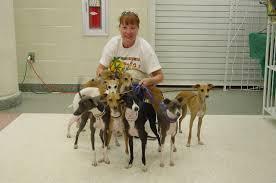 italian greyhounds breeders