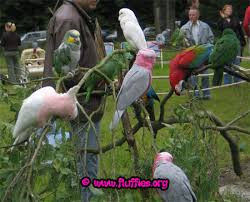kinds of parrot