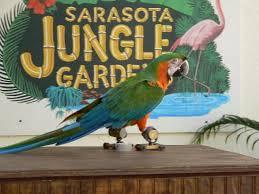 parrot shows