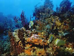 coral reef habitats