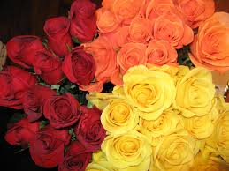 roses for birthday