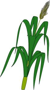 clip art wheat