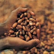 fair trade cocoa