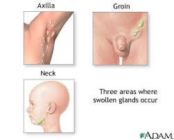 glands in body