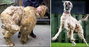 matted dog hair