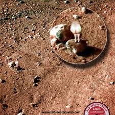 new pics of mars