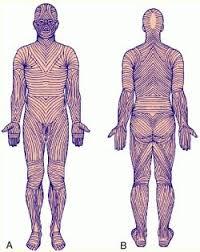 skin lines