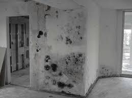 black mold on wall