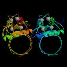 estrogen receptor