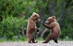 cute bear picture
