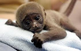 picture of a baby monkey