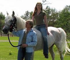 russian arabian horses