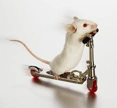 picture of white mouse
