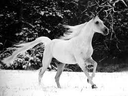 horse desktop themes