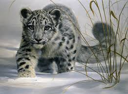 leopard snow