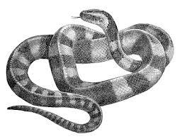 clip art of snakes