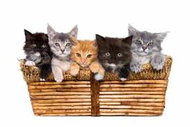picture of cute kittens