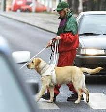 dogs that help blind people