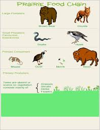 north american prairie food web