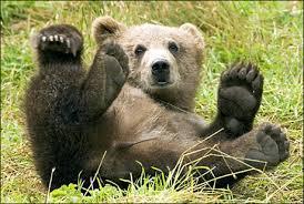 bear time