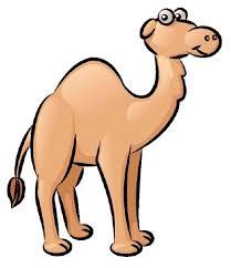 camel animals