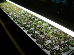 germination trays