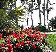 cypress flowers