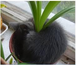 cat flower pot