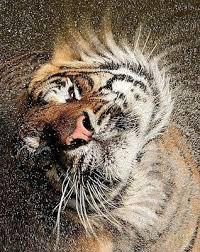 best animal photos