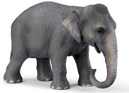 indian elephant images